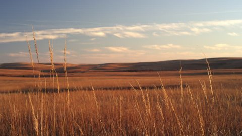 Wheat on great plains sunset