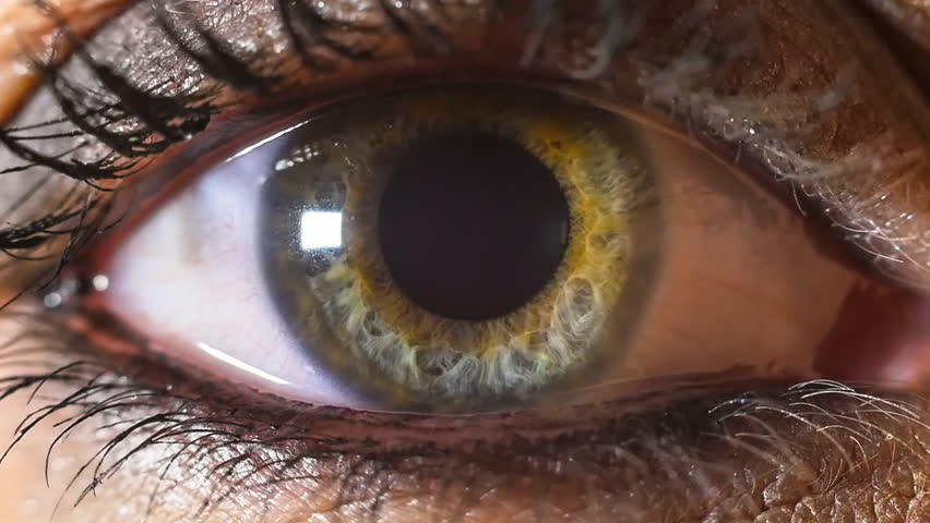 Iris pupil contracting slowmotion,female green make up eye | Shutterstock HD Video #8461846
