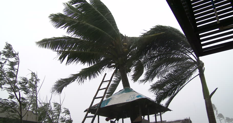 Hurricane Winds Lash Town Palm Trees. View of palm trees thrashing as a powerful hurricane hits. Originally shot in 4K on Sony PXW Z100 4096x2160 30p - Hagupit II