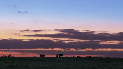 Sunrise in a pampa gaucho ranch.