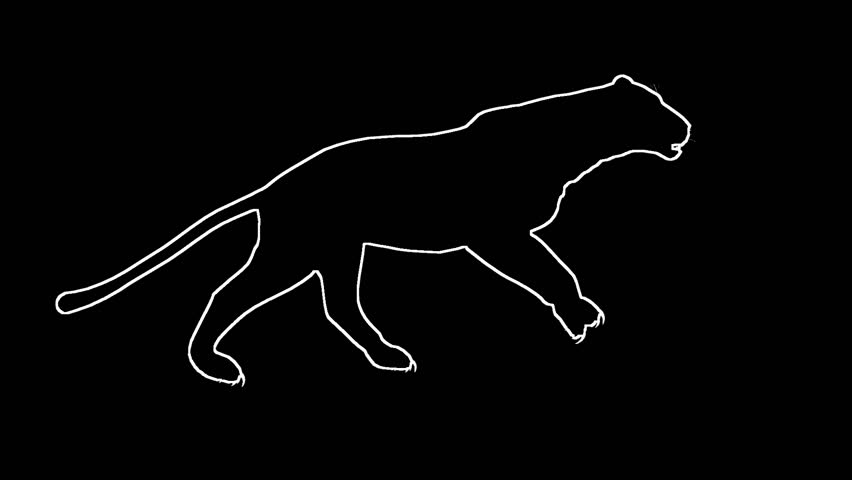 Looping Jaguar/panther/Leopard/puma Animation with silhouette outline