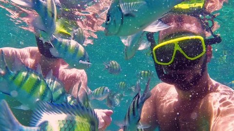 2 Men feeding fish .School of fish. Underwater scene.