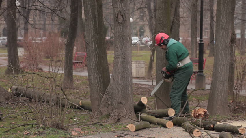 Lumberjack Logger Worker In Protective Gear Cutting