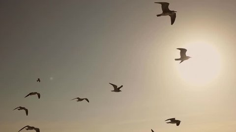 Flock of Seagulls And Birds Flying High In The Sky At Sunset. Super Slow Motion 120p