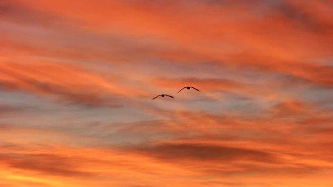 4K Migration Birds Skagit Valley