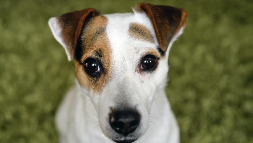 cute dog shake his head