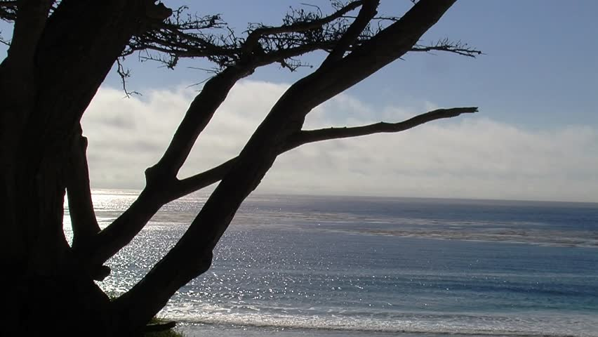 Beautiful Footage of the cypress trees of Carmel California