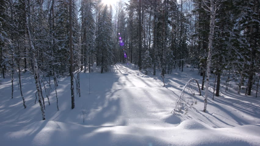 Beautiful Winter Forest. Flying Trough. Aerial View.  Snow Trees.