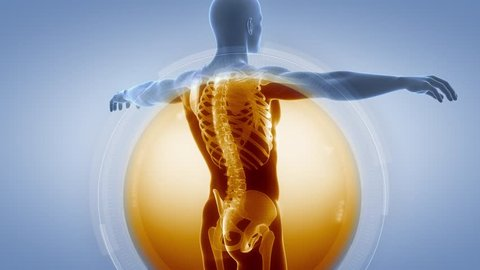 X-ray anatomy medical scan SKELETON and BONES