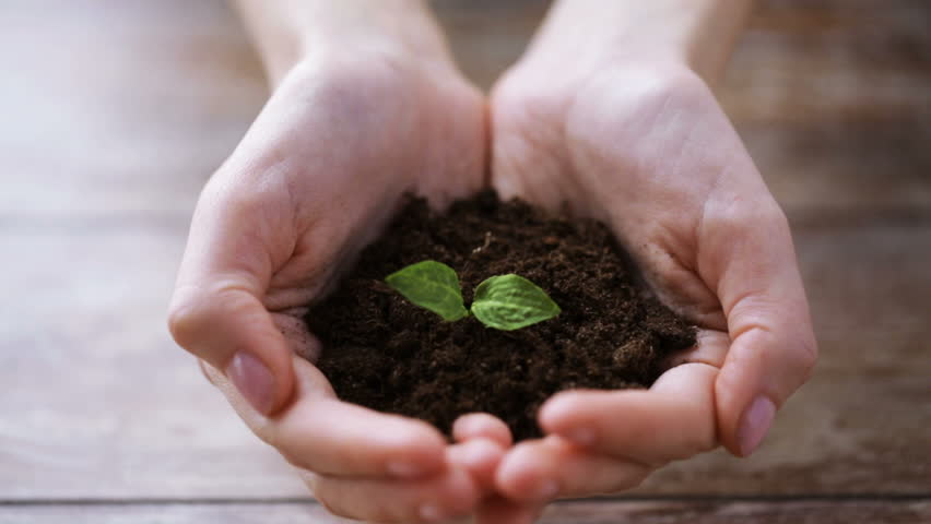people, gardening, charity, ecology and environment concept - close up of woman cupped hands holding soil with sprout #9140513