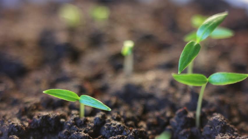Plants growing time lapse | Shutterstock HD Video #9214631