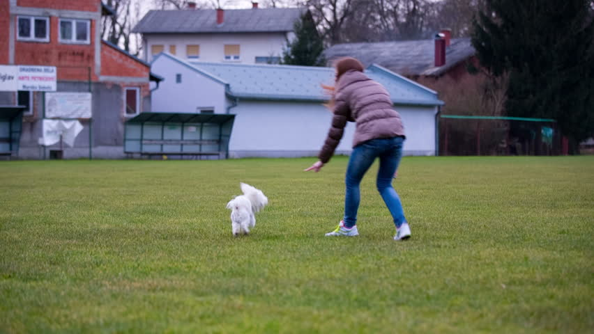 Person play with cute Maltese dog. Outdoor white shot of female person enjoying time with cute white puppy.