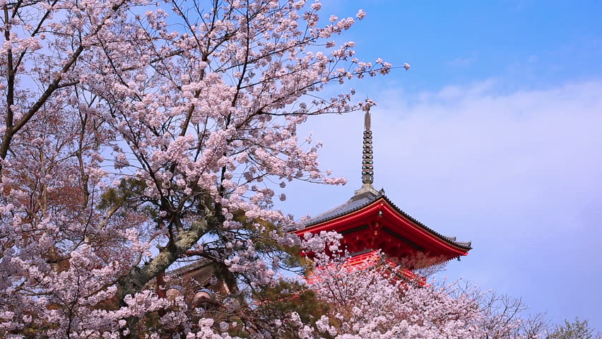 Pagoda with blue sky and cherry blossoms on the background. Japan, Kyoto, Kiyomizu Temple. | Shutterstock HD Video #9525077