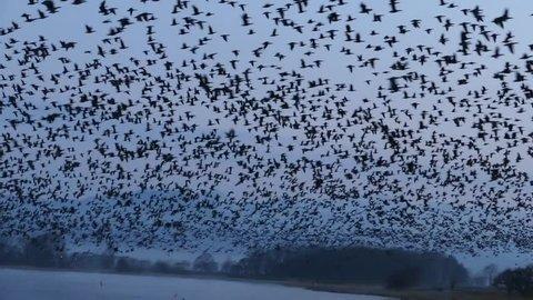 "Flying of migratory birds. _5 / April 12, 2015 to the shooting in Japan Hokkaido of swamp / Taking flock of migratory birds that were flying to the ""Miyajima swamp"" of Ramsar wetlands"