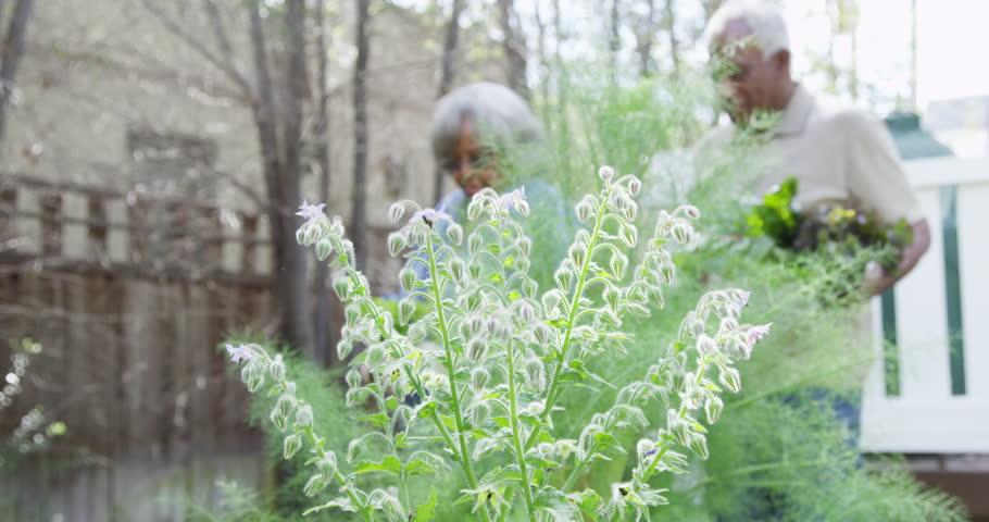 Mature African couple walking in garden with vegetables | Shutterstock HD Video #9778304